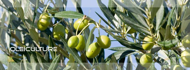 oleiculture lonneo